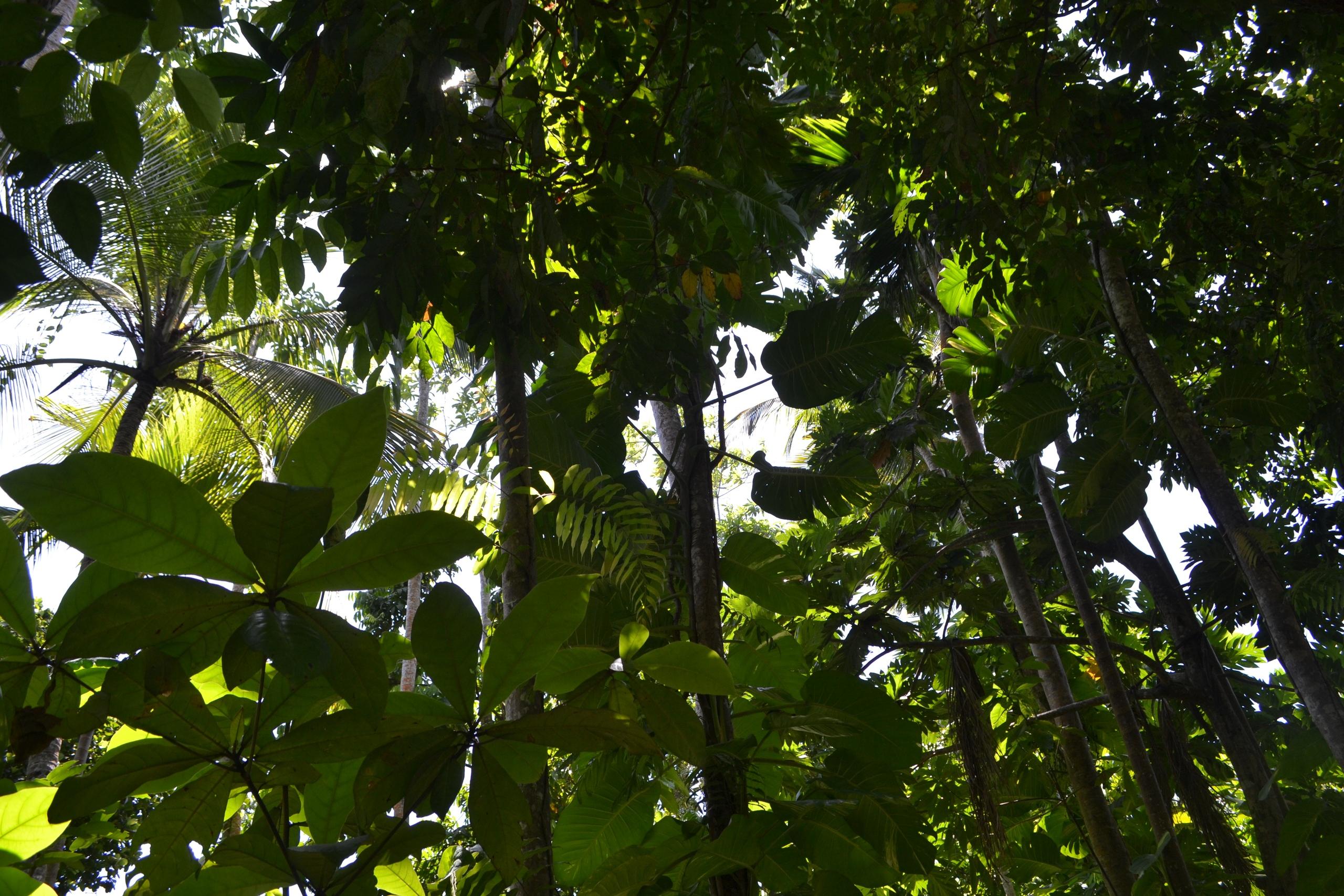 Шри Ланка (фото) - Страница 2 WKD5UbLY-t0