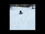 Собака, которая любит кататься на санках с горы