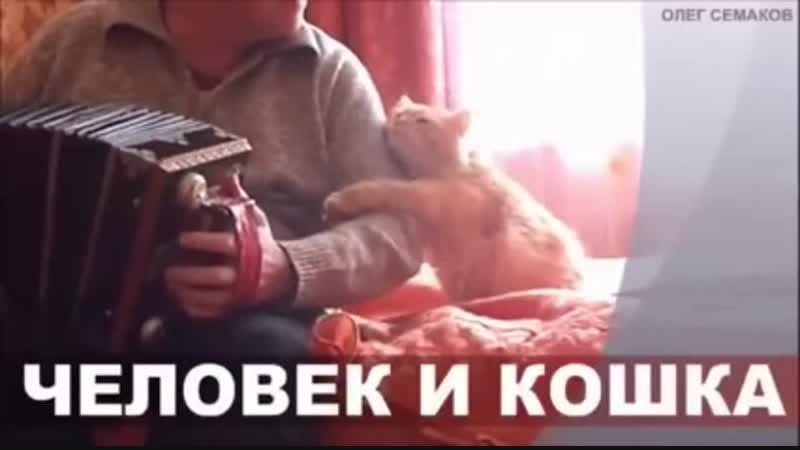 Человек и кошка.