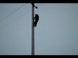 Обучение на электрика (VHS Video)