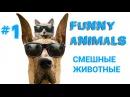 1. Смешные животные. Приколы про животных коты и собаки.