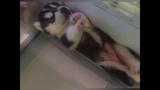 Малыши Хаски в Холодильнике Baby Huskies in the fridge