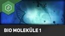 Kohlenhydrate Fette Proteine Biomoleküle WTF 1