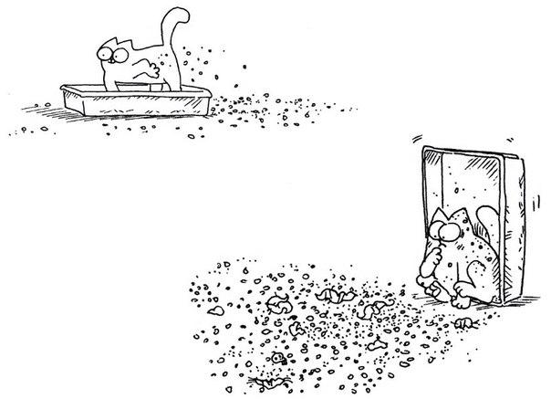 Animal ru cat articles как приучить котенка к