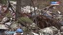 Сосновый бор задыхается от мусора