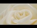 Превью Роза
