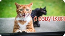 Приколы с котами и смешная ОЗВУЧКА животных – приколы 2018 лучшие до слез от PSO