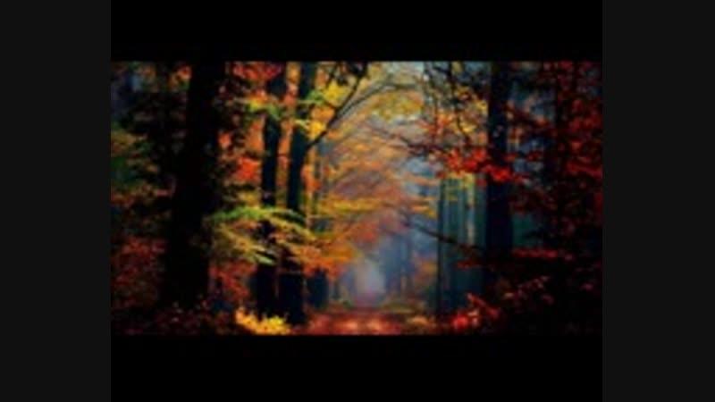 ! Pachelbel - Forest Garden (Album)