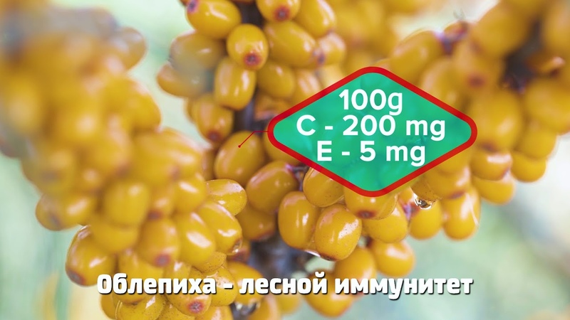 Wild siberia rus 2