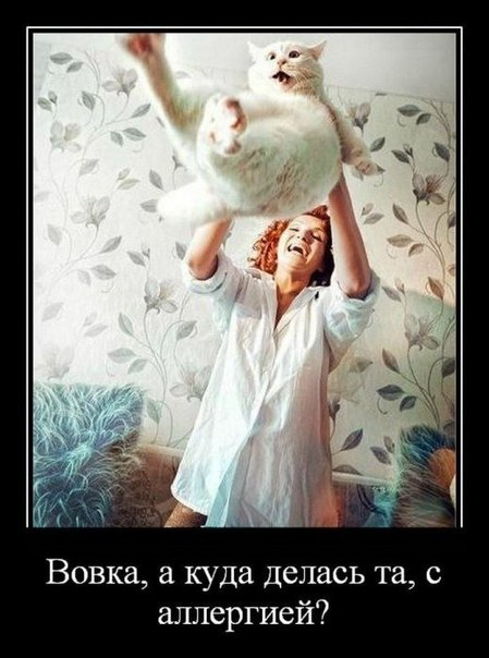 http://cs14106.vk.me/c7002/v7002540/c507/LgekrL0rCHU.jpg