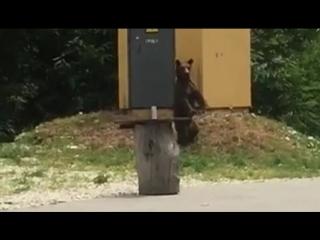 Медвежонок вышел на прогулку около жилых домов в горах Сочи.