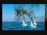 Поль Мариа. Красота моря.mp4