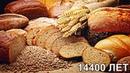 Самые ранние свидетельства выпечки хлеба в северо восточной Иордании 14400 лет назад