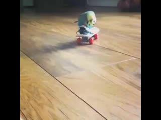 Skater boy неудачные дубли