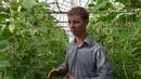 10 лет выращивания огурцов 6 тонн за три месяца!