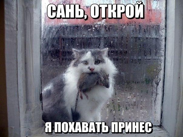 http://cs617224.vk.me/v617224743/10a4e/yxFpeRi6z7M.jpg