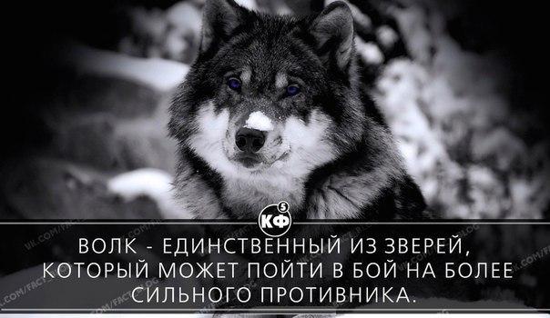 https://pp.vk.me/c543100/v543100816/226b4/RUV-U2c_Ez8.jpg