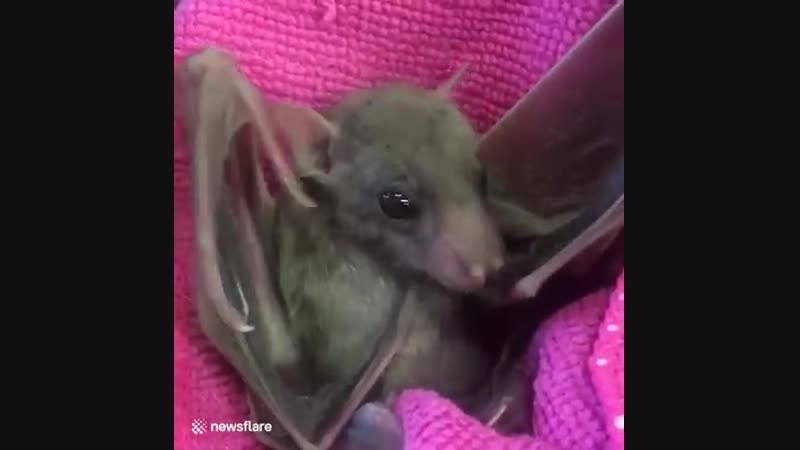 Show this cute bat to someone to brighten their day! 😍