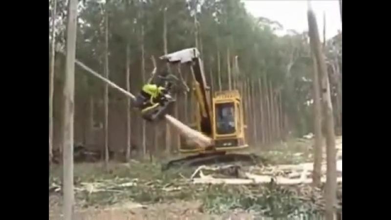 вырубка леса у китайцев )классно ...