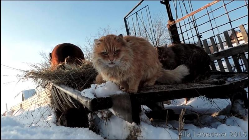 Зима Катание на санях Сибирские Кошки конь Яшка