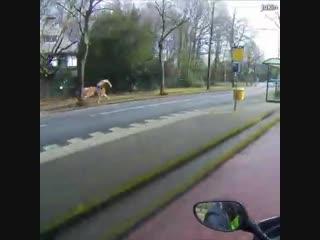 Как поймать пони на мотоцикле. Ну! Погоди! Лошадка!