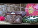 #86 США Гавайи Полинезийский культурный центр Острова Фиджи Таити Гавайи (Часть 1)