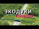 ДОРОГИ РОССИИ ЭКОДУК НА ТРАССЕ М 3 УКРАИНА НОВАЯ РОССИЯ