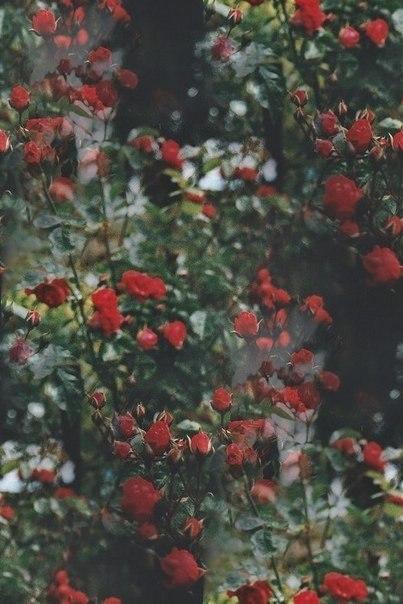 Цветочные и растительные фоны - Страница 3 H_ponos1qU8