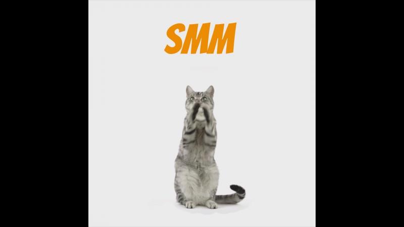 Котик остается без SMM-a