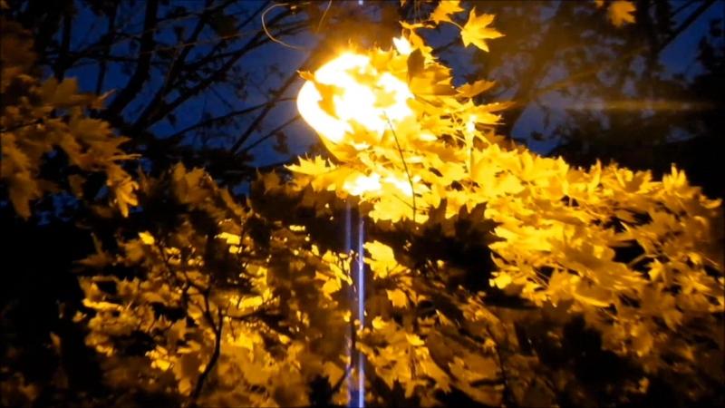 Распустила осень золотые косы