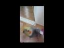 попугай корелла поёт дабстеп