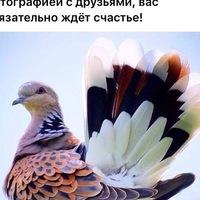 Анкета Сергей Апальков