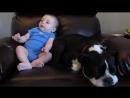 Dog Runs Away When Baby Poops