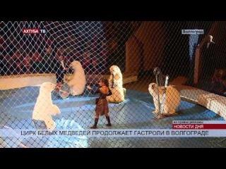Медведи и обезьяны покорили волгоградскую публику в цирке
