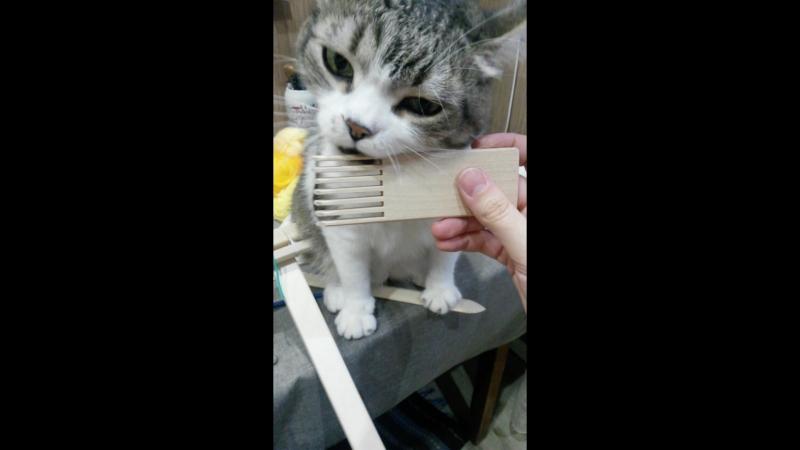 Кот и ткацкая рама