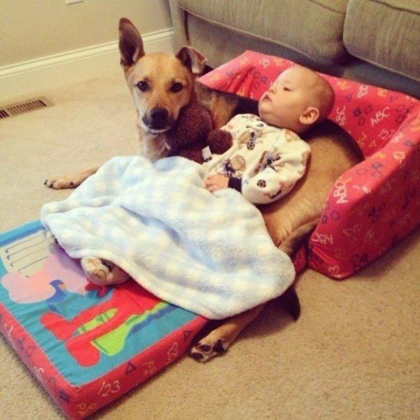 Երեխան և շունը. մի ընկերության պատմություն (ֆոտոշարք)