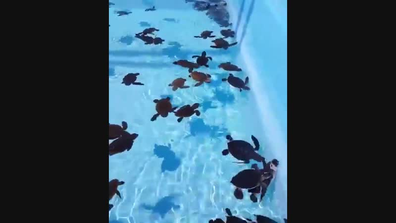 местный бассейн