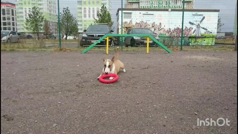 Dog playground. Apr'18.