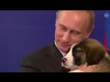 Президент и животные