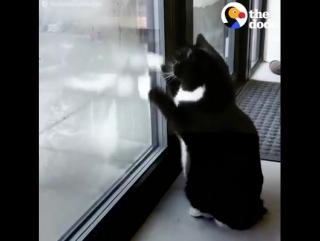 She may look like a normal cat — but she's secretly a ninja