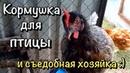 Апгрейд кормушки / Раненая птица / Куры как на веревочке