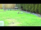 Веселые кролики для поднятия настроения