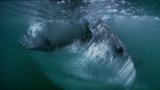 Vangelis - Oceanic (HD Video)