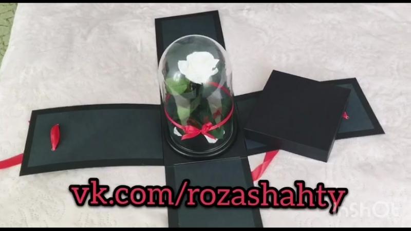 Роза под куполом г. Шахты