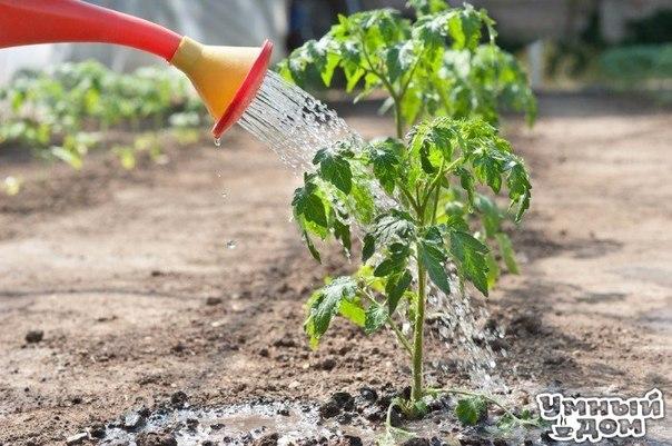 МАЛЕНЬКИЕ, НО ОЧЕНЬ ВАЖНЫЕ СЕКРЕТЫ ОПЫТНОГО САДОВОДА 1. Ускорение пророста. Чтобы семена быстрее проросли их замачивают в растворе перекиси водорода (4%) на 12 часов (капуста), а семена помидоров и свеклы - на 24 часа. Для обеззараживания семян (вместо марганцовки) их обрабатывают 10% перекисью водорода 20 минут. Соотношение раствора и семян 1:1. Затем семена промывают и просушивают. 2. Йод для капусты. В ведро воды добавить 40 капель йода. Когда начнет формироваться кочан, поливать капусту…