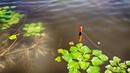 КАРАСЬ тут конечно отменный! Ловля карася в окнах травы. Рыбалка на поплавочную удочку.