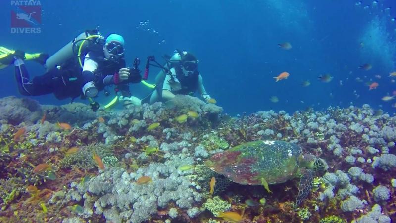 Черепаха на дайвсайте Crystal Bay острова Нуса-Пенида | Дайвинг на Бали
