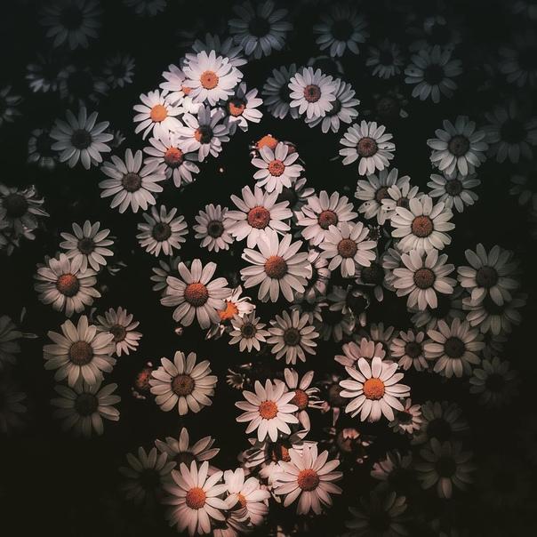 Цветут цветы: фотографии Хико Такаши