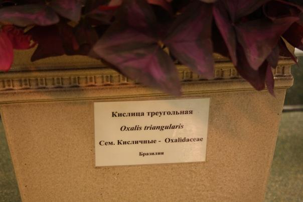 С Настей перевезли от тёщи такой цветок, но он сдох=( Теперь узнали как называется «бабочка».  3 июня 2018 года