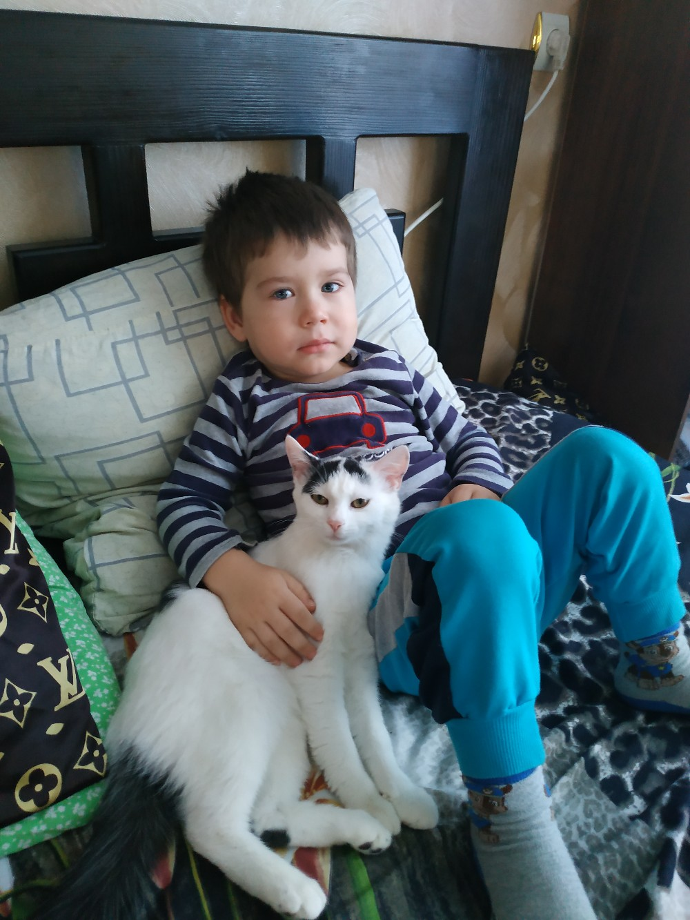 Пропала кошка в раене Коротченко.